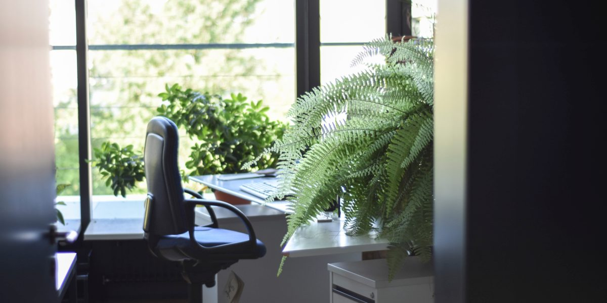 desk and a fern